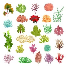 Coral And Seaweed. Underwater ...