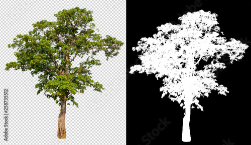 Foto auf Leinwand Schwarz single tree on transparent picture background with clipping path, single tree with clipping path and alpha channel on black background