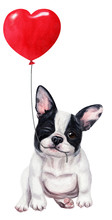 Cute French Bulldog Puppy With...