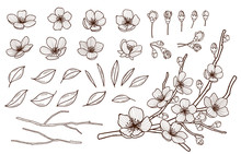 Hand Drawn Spring Flowers Blossoming Set. Sakura Flowers,buds, Leaves And Branches Isolated On White Background.Cherry ,plums,apple Tree Blossom Elements Bundle . Vector Illustration.