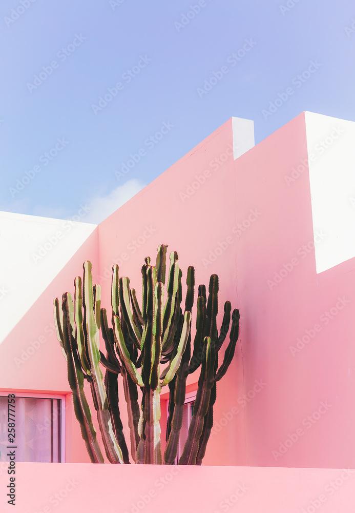 Fototapeta Plants on pink concept. Cactus on pink wall background. Minimal plant art