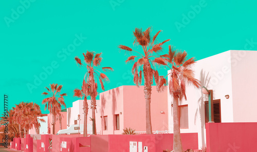 Canvas Prints Green coral Canary Islands. Plants on pink fashion concept. Pink pastel colours mood. Palm location