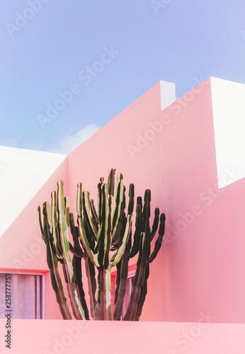 Rośliny na różowym pojęciu. Kaktus na różowym ściennym tle. Minimalna sztuka roślin
