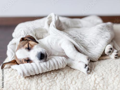Obraz Sleeping puppy on dog bed - fototapety do salonu