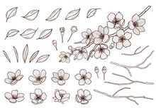 Almond Blossoms Hand Drawn Set...