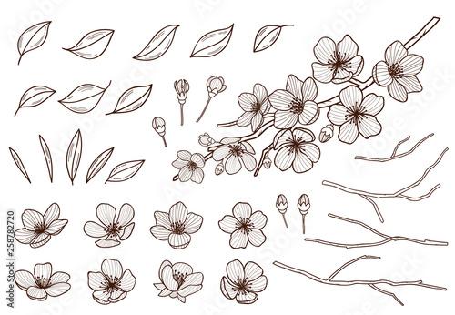 Almond blossoms hand drawn set Canvas Print