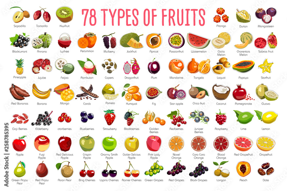 Fototapeta Fruits Icons – A huge set includes 78 types of colorful fruits with names. The icons were drawn in free hand and have thin gray line. Can be used for supermarket categories, for learning, as a poster.