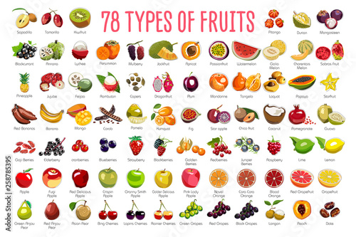 Cuadros en Lienzo  Fruits Icons – A huge set includes 78 types of colorful fruits with names