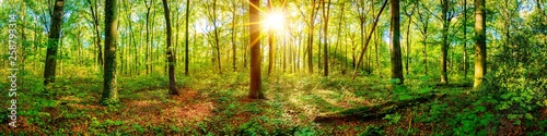 Foto  Beautiful forest panorama in spring with bright sun shining through the trees