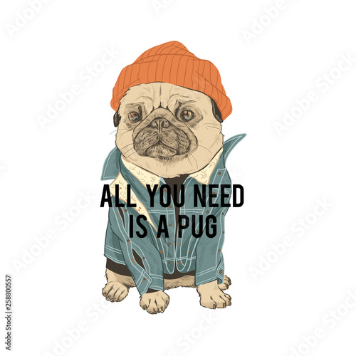 Typography graphic print pug in hat. All you is a pug need quote Fototapet