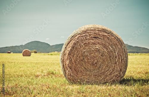 Cuadros en Lienzo Round bales of hay in the summer field