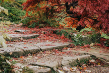 Fallen Leave On Old Stone Stairs In Garden. England