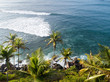 Aerial view of coconut trees at seaside the morning,Sri lanka
