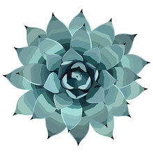 Top View Of A Blue Agave Plant Vector Illusration