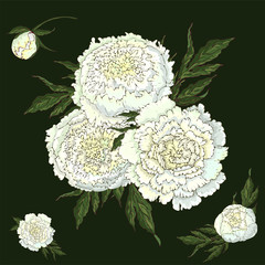 Panel Szklany Peonie Vector peonies. Set of isolated white flowers. Bouquets of flowers on a dark green background. Template for floral decoration, fabric design, packaging or clothing.