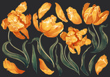 Fototapeta Tulipany - Set of floral elements with yellow tulips flowers and leaves. Hand drawn, vector botanical flora for decoration, wedding invitation, patterns, wallpapers, fabric, wrapping paper. Realistic style.