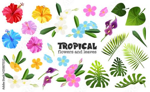 Fotografie, Obraz  tropical objects set