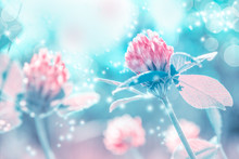 Beautiful Spring Wild Meadow Clover Flowers In Sun Light, Macro. Soft Focus Nature Background. Delicate Pastel Toned Image. Greeting Card Template. Nature Floral Springtime. Copy Space