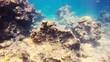 Unterwasserwelt mit Fischen, Felsen und Taucher