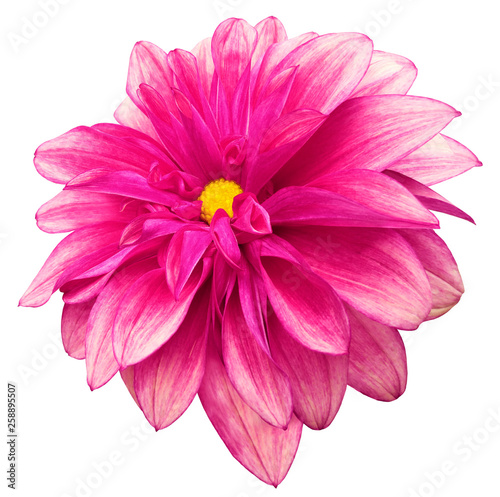 Crédence de cuisine en verre imprimé Rose flower isolated bright pink dahlia on a white background with clipping path. For design. Closeup. Nature.