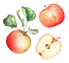 Watercolor Red Garden Apples With Green Leaves