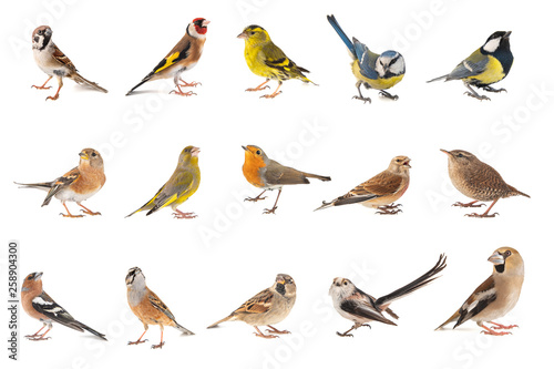 Fotografija Set of small song birds isolated on white background