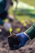 Close up with selective focus on a plant seedling.human hand are planting the seedlings plant.