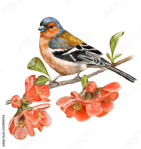 Beautiful bird on a flowering branch. Hand drawn watercolor Canvas Print