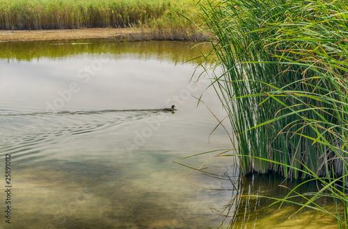 Fotografía  Laguna en el Parque Nacional Tablas de Daimiel