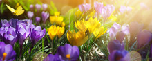 Spring Flowers On Field - Abstract Spring Landscape
