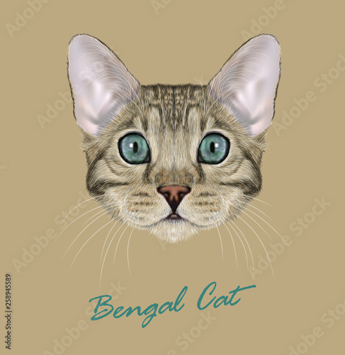 Bengal cat animal cute face  Vector young silver gray tabby