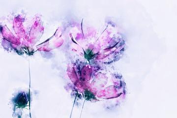 Fototapeta Łąka Digital watercolor painting of pink cosmos flowers