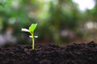 Young plants growing from seed step up in nature with The fertile soil.