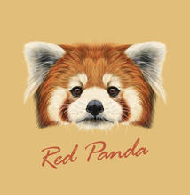 Red Panda Rare Animal Cute Face. Vector Asian, Chinese Funny Red Cat Bear Head Portrait. Realistic Fur Portrait Of Bamboo Red Panda Ailurus Fulgens Animal Isolated On Tan Background.