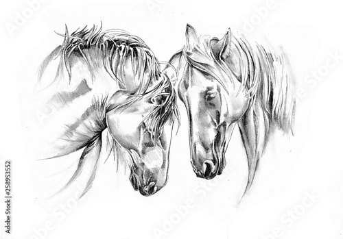Valokuvatapetti freehand horse head pencil drawing