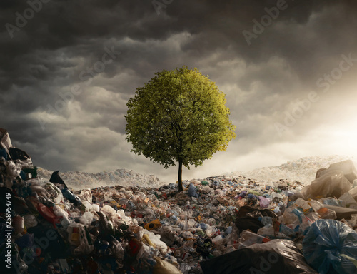 Lonely tree growing on the garbage dump, field at the sunset with copy space Wall mural
