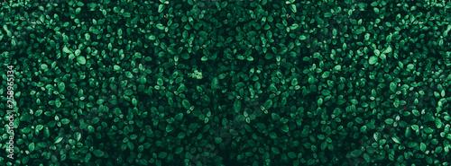 Fotografía  Tropical green leaf background, Dark tone theme.
