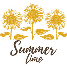 Summer Time Vector Illustration  Sunflowers