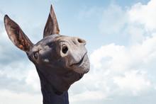 Funny Black Donkey Smiling On Blue Sky