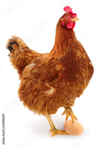 Fotobehang Kip Brown hen and egg isolated.