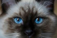 Very Beautiful, Bright, Kitten...