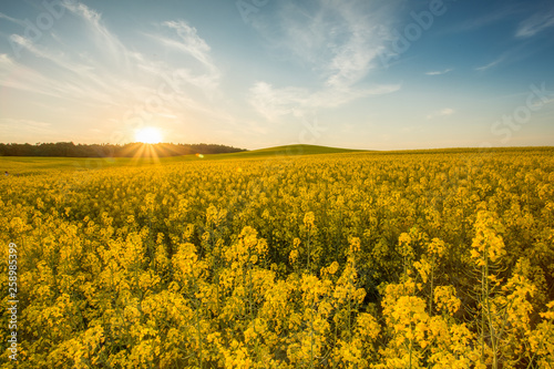 Foto op Plexiglas Weide, Moeras yellow rapeseed field at sunset