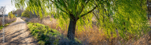 Valokuva  campo en primavera con árboles brotando