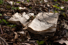 An Old Decomposing Book Lying On The Forest Floor