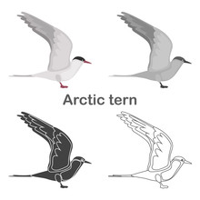 Arctic Tern Color Flat, Simple, Line, Black And White Colors Concept Icons Set