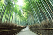 The pride of Arashiyama