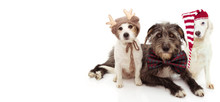BANNER THREE  DOGS CELEBRATING CHRISTMAS. JACK RUSSELL AND SHEEPDOG WEARING A REINDEER, SANTA CLAUS HAT AND BOWTIE HOLIDAYS. ISOLATED ON WHITE BACKGROUND.