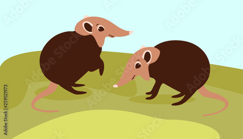 Fototapeta  Black and rufous elephant shrew,vector illustration,flat