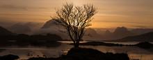 Lone Winter Tree Silhouetted Against Mountain Sunset, Near Fredvang, Flakstadøy, Lofoten Islands, Norway