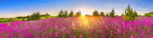 Spring Landscape Panorama With Flowering Flowers In Meadow